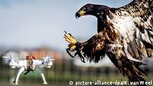 Anti Drohnen Greifvogel Niederländische Polizei