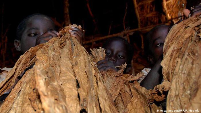 Djeca sortiraju i vežu listove duhana u Malaviju
