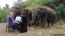 Thailand Paul Barton spielt Beethoven vor Elefanten