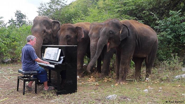 Paul Barton playing the piano for elephants
