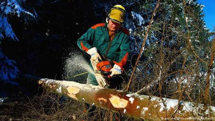 Un leñador cortando madera.