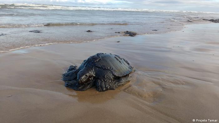 Tartaruga-marinha morta e completamente coberta por uma camada espessa de petróleo