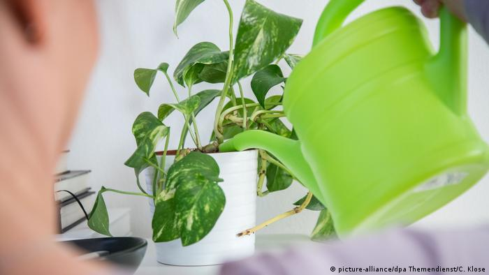 Zimmerpflanzen giessen