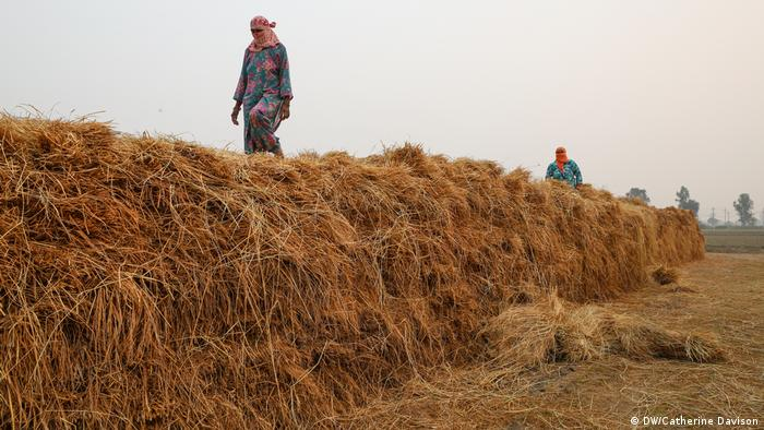 Women stack rice on a farm in India (DW/Catherine Davison)