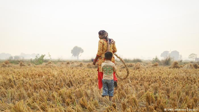 An Indian woman, head covered, looks through the basmati fields, a small boy in tow (DW/Catherine Davison)