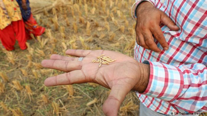 A man holds up his hand to reveal several grains of brown rice