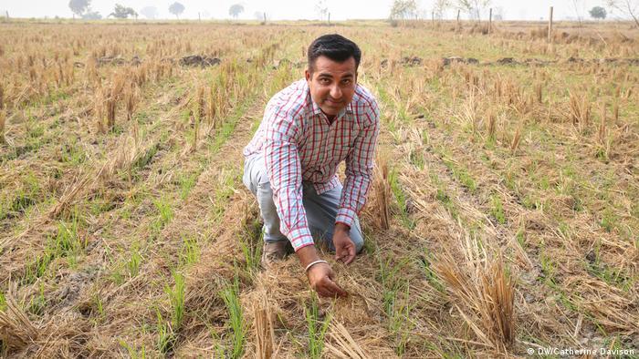 Farmer Vikas Chaudray kneels to the ground to show off his wheat crop to the camera (DW/Catherine Davison)