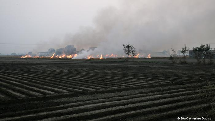 Stubble burning in a rice field near Karnal, Haryana, (DW/Catherine Davison)