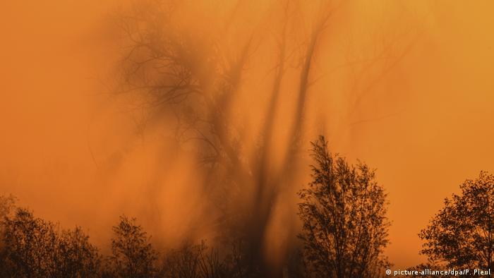 Загадковий ранковий туман у районі внутрішньої дельти Одеру - в бранденбурзькому Одербрух.