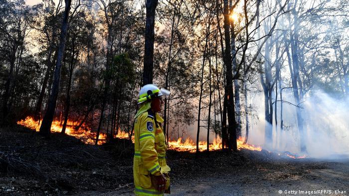 Buschbrände in Australien: IFAW pflegt verletzte Tiere