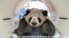 BdT Gesundheitscheck bei Jiao Qing aus dem Zoo Berlin