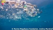 Indonesien Umweltverschmutung l Manta-Rochen ernährt sich von Fisch