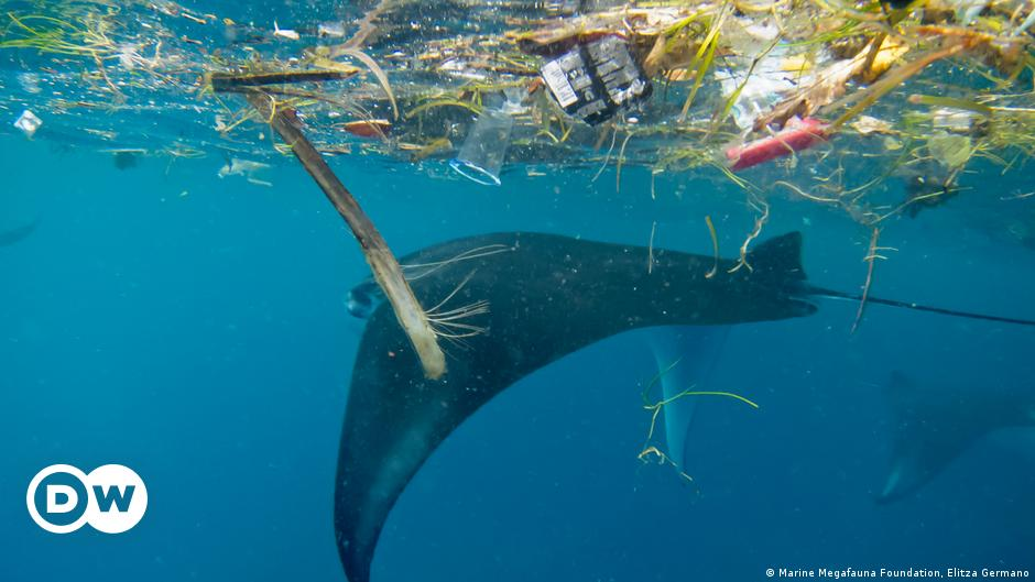 Climate change: EU-backed study shows alarming state of oceans