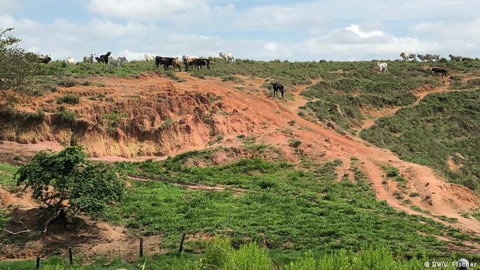 Brasil fue criticado por las tasas de deforestación en la selva amazónica.