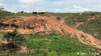 Вырубка лесов в Амазонии
