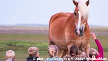 Deutschland Insel Baltrum l Pferd