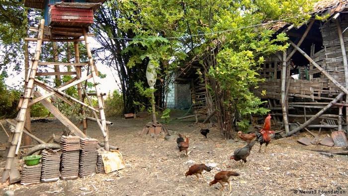 Indonesien Hühnerhaltung Giftstoffe Eier (Nexus3 Foundation )