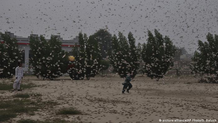 Pakistani children try to avoid locusts swarming in Rahimyar Khan, Pakistan
