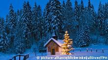 Deutschland Tannenbäume Symbolbild