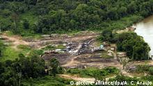 Amazonas Brasilien Abholzung Rodung