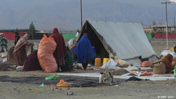 Pinienkern-Ernte in Afghanistan (DW/F. Zahir )