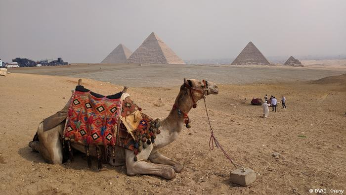 Egypt - a camel in the sands in front of a pyramid