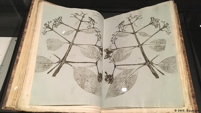 Open book with stems and leaves pressed onto the pages