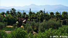 Morocco ANIMA-Garden view across the tree tops with mountains in the background (DW/V. Witting)