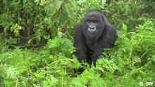Sendung Eco Africa #191 Screenshot