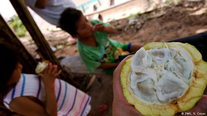 Variedad de alimentos de la Amazonía peruana: el fruto del cacao.