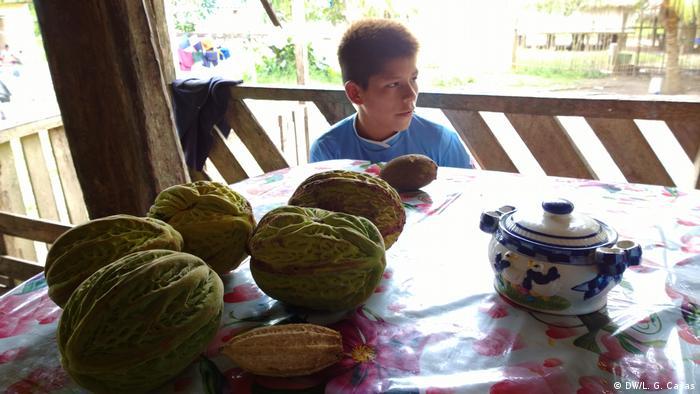 Cocina en el Amazonas: un niño sentado a la mesa, y sobre ella, frutos similares al cacao.