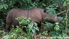 Malaysia trauert um letztes männliches Sumatra-Nashorn