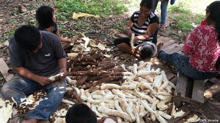 Miembros de la comunidad uchunya pelando yuca en grupo.