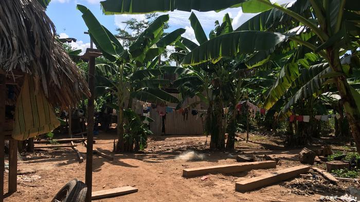 Plantas de plátano en Santa Clara de Uchunya.