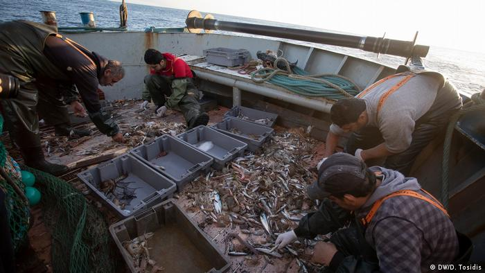 Fishermen sort through their catch on their fishing trawler