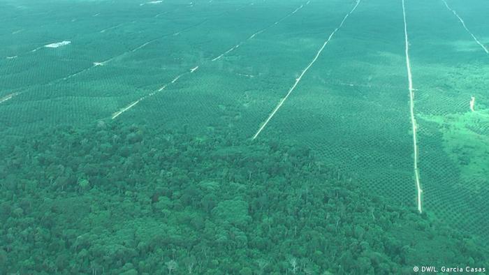 Peru Ucayali   Reportagebilder zum Amazonas Regenwald in Santa Clara de Uchunya (DW/L. Garcia Casas)