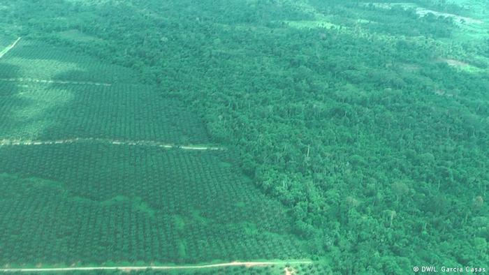 Foto de la Amazonía peruana.