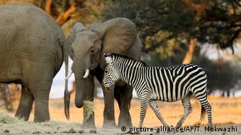 Mana Pools National Park Simbabwe