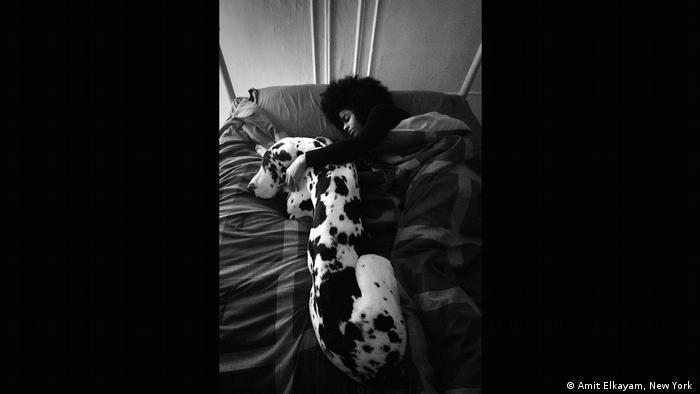 a Great Dane sleeps with its owner (Amit Elkayam, New York )