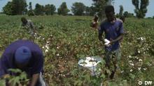 Global 3000 Bio Mali Klimawandel