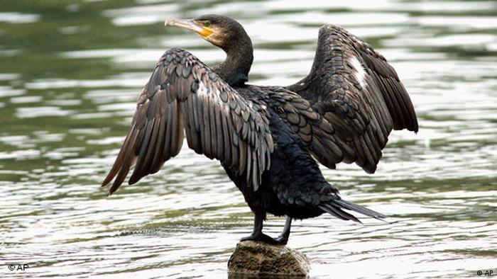 greifvögel erkennen im flug
