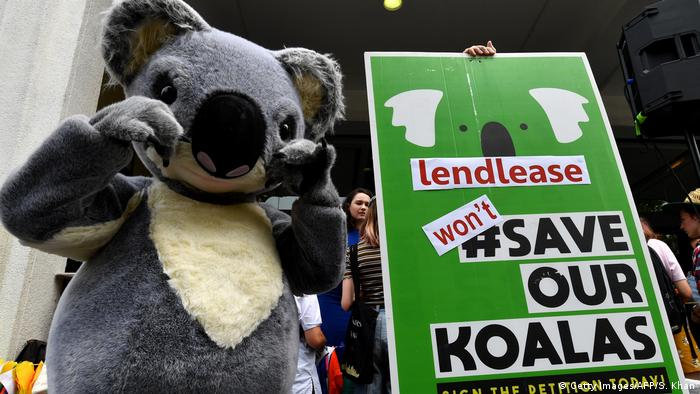A student holds up a placard as another is dressed as a koala