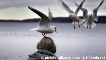 dpatopbilder - 28.11.2019, Bayern, Dießen: Eine Möwe sitzt am Ufer des Ammersees auf dem Kopf einer Spaziergängerin in der Hoffnung ein Stück Brot zu ergattern. Foto: Karl-Josef Hildenbrand/dpa | Verwendung weltweit
