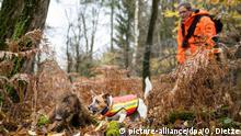 BdT mit Deutschlandbezug l Wildschweinkadaver-Suchhunde