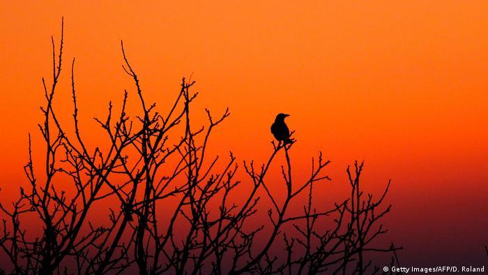 BdT Bild des Tages | Sonnenaufgang Gaiberg (Getty Images/AFP/D. Roland)