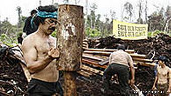 Entwässerung des Torfwaldes (Quelle: Greenpeace)