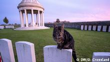 A cat guards the headstones of Indian troops at Bedford House Cemetery near Ypres, Belgium