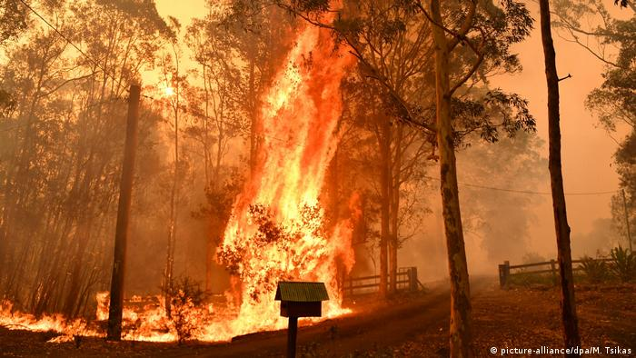 A wildfire burns a tree in Australia's NSW province