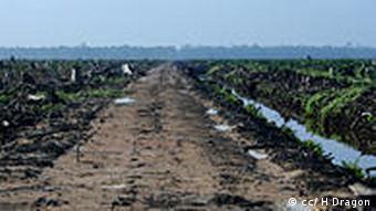 Torfwald abgeholzt für Palmöl – Sumatra