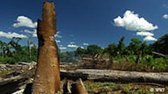 Reste eines Torfwaldes (Quelle: Greenpeace)